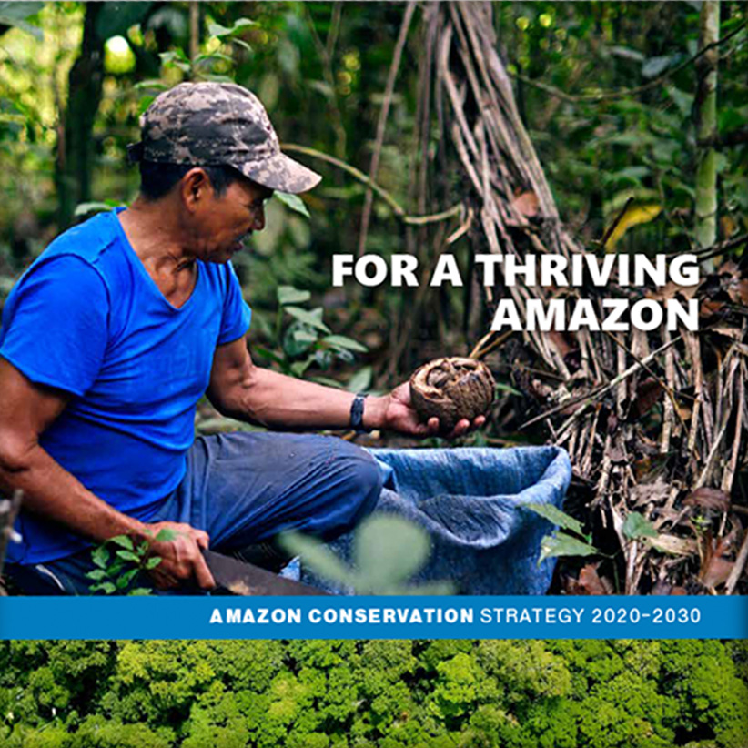 Amazon Conservation // Strategy Report